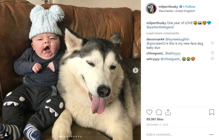 Huskies You Need To Follow On Instagram